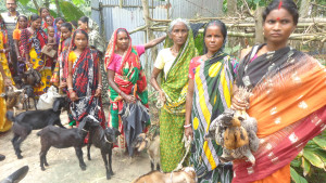 Goat & chicken distribution_01