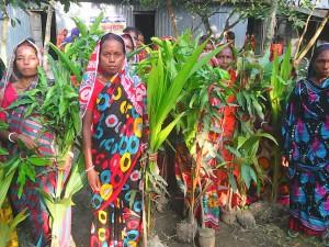 Tree sapling distribution_Aminpur village_04